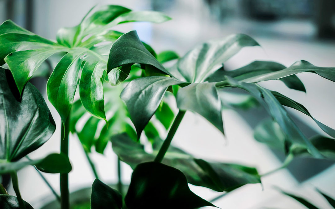 Designing with Indoor Plants